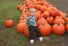 The Pumpkin Patch :